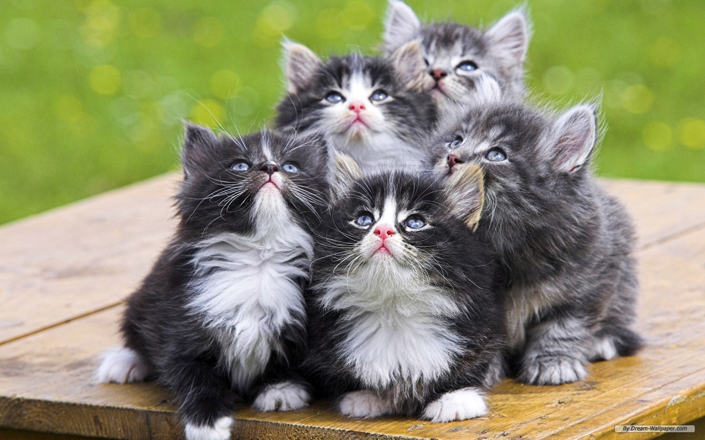 Socionic_kittens