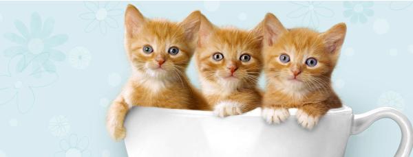 Socionic_kitty